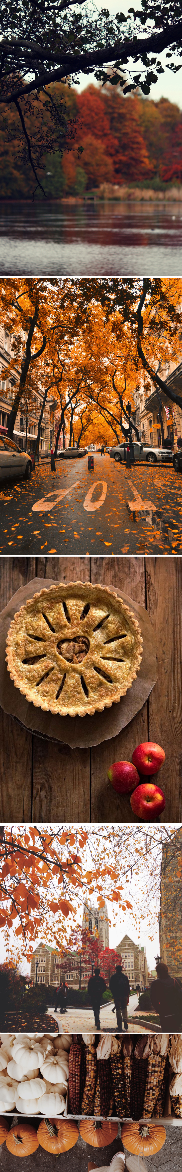 autumn fall guide inspiration cosy fall pumpkin pie
