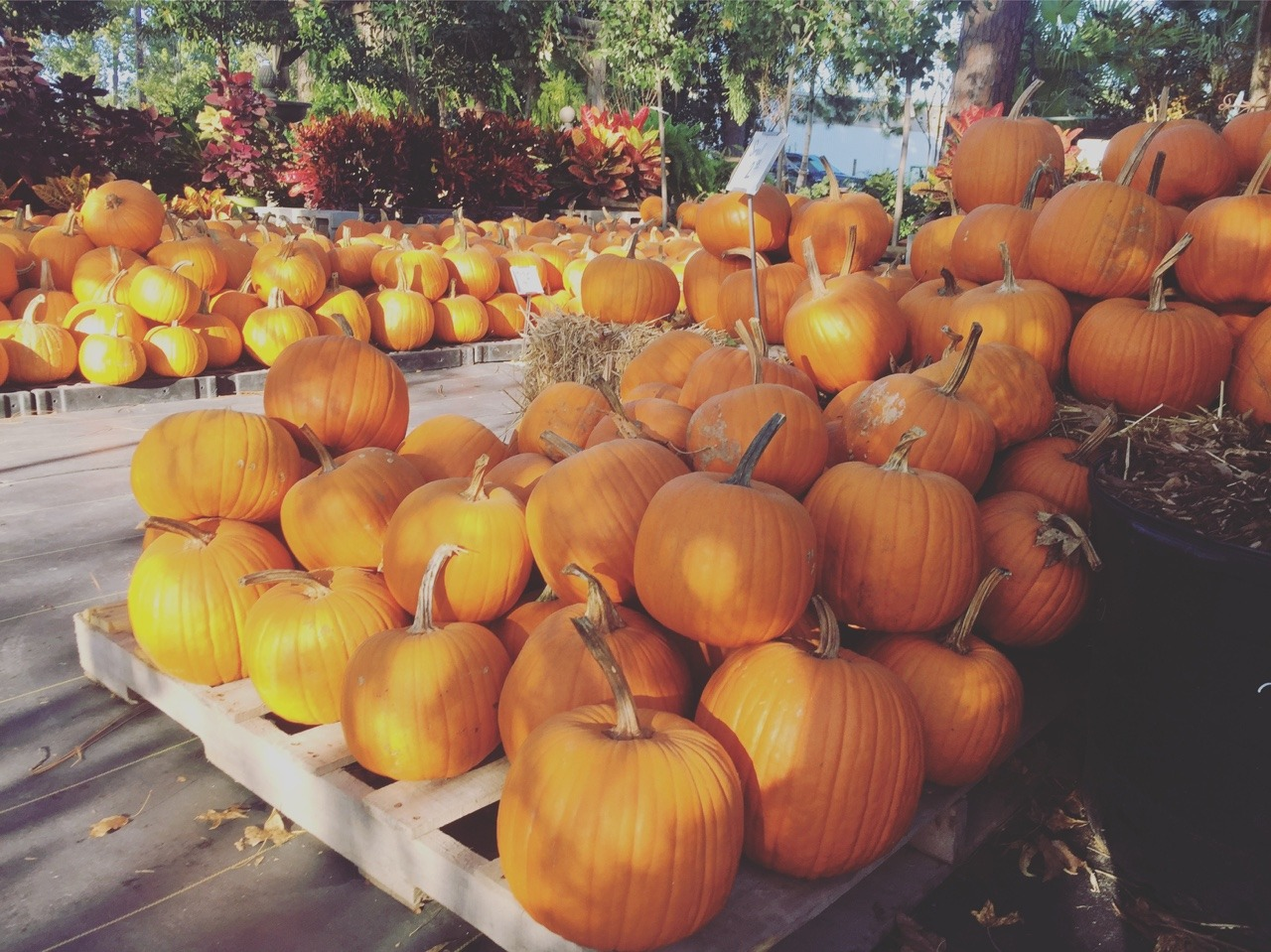 autumn in pumpkin land