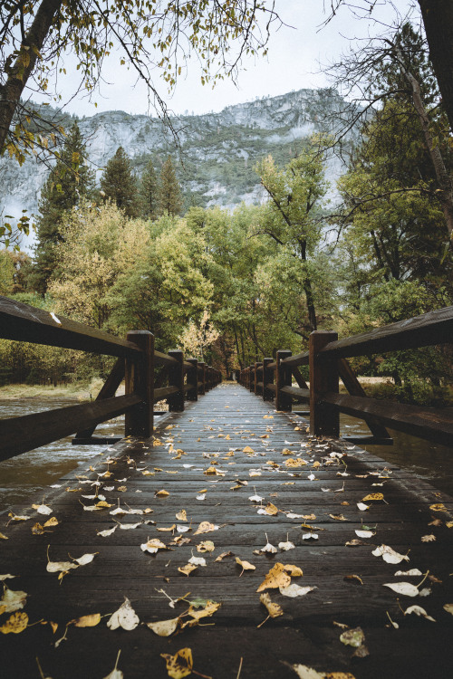 autumn lovers fall walk