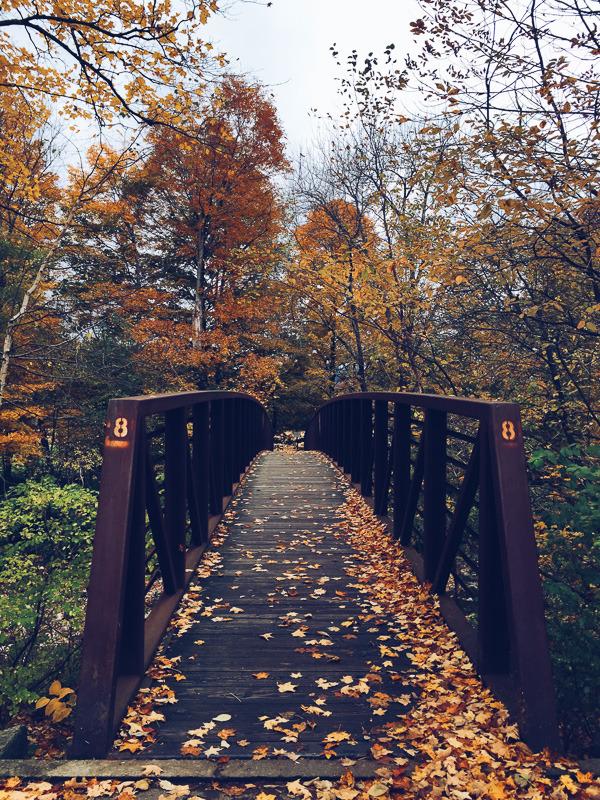 autumn loving